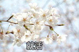 桜 のデーターRR